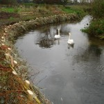 Willow Revetment