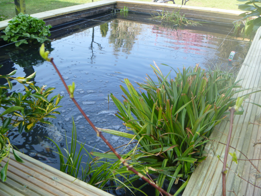 Domestic ponds casterbridge fisheries ltd for Ornamental fish pond maintenance