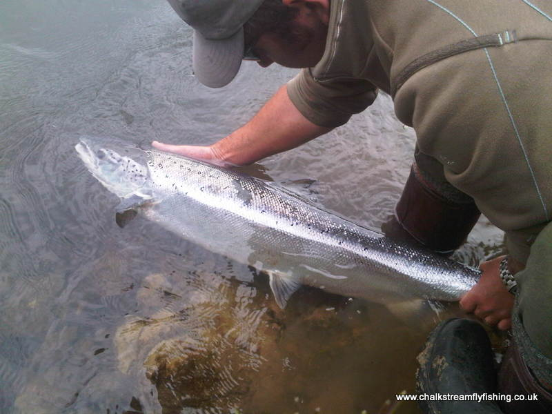 A stunning Frome Salmon